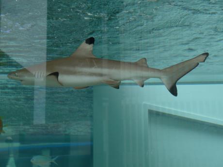 44th_Sony_Aquarium_03