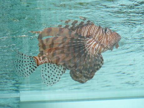 44th_Sony_Aquarium_04