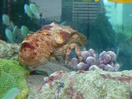 44th_Sony_Aquarium_06