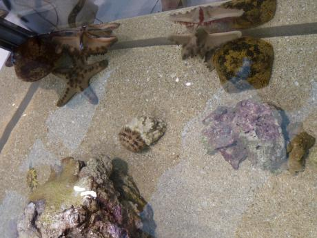 44th_Sony_Aquarium_07