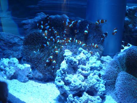 44th_Sony_Aquarium_08