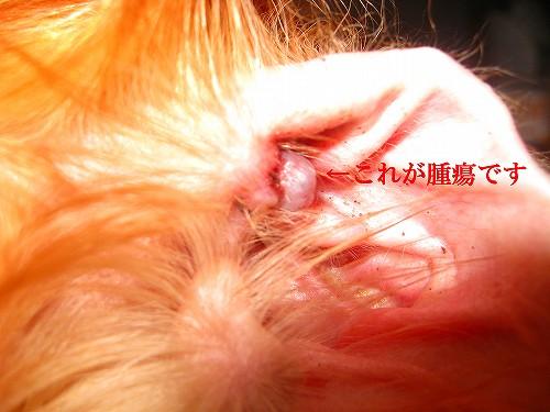 s-そっくの摘出前の腫瘍