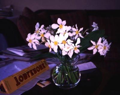 ナルシス花瓶3JPG_convert_20110507132449