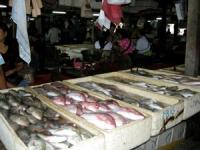 魚市場ぁ~~!