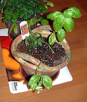 ミニトマト&バジル