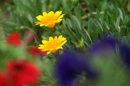 黄色い花♪