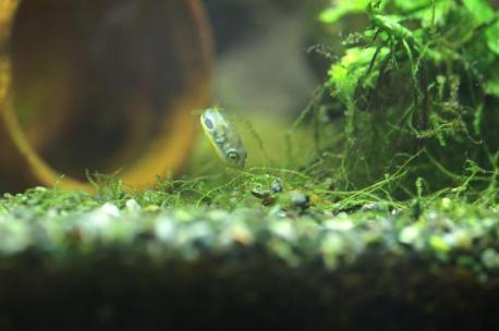 獲物発見!