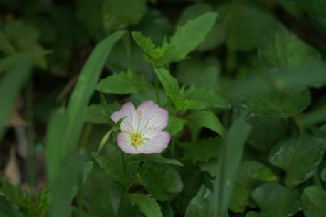 ピンクのお花♪笑