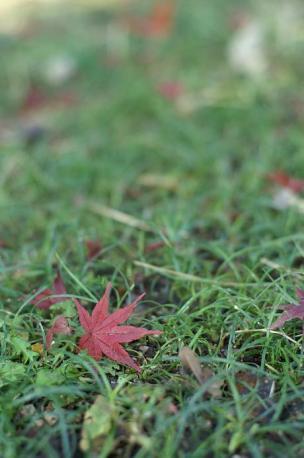 もみじの葉っぱ♪