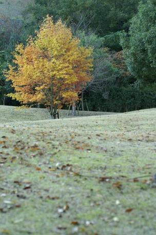 公園の木♪