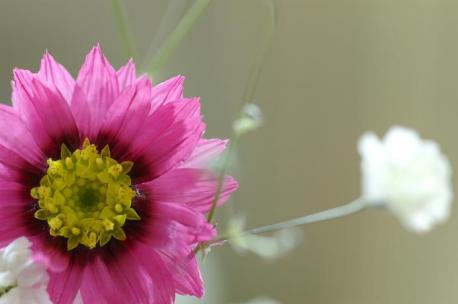 ピンクのお花♪