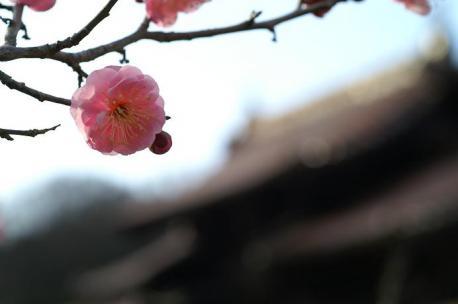 お花とボケ門