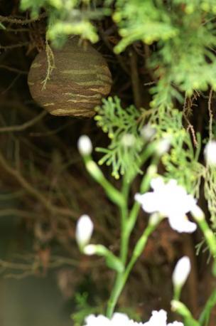 スズメバチの巣・・・やばっ!