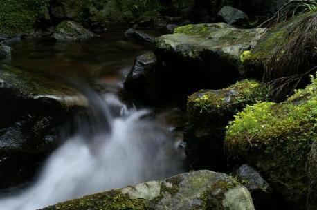 渓とヒメレンゲ