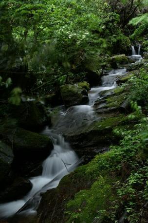 両端にヒメレンゲ咲いてる渓