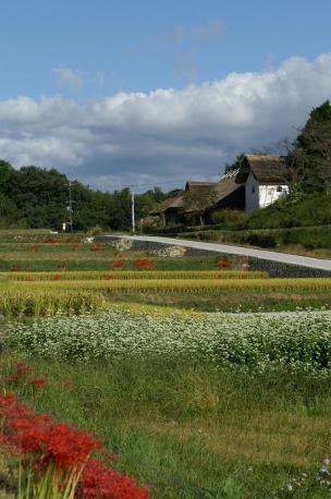 彼岸花の咲いてる風景