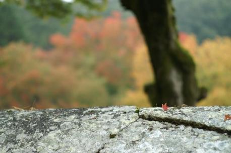 落ち葉と櫂の木ボケ♪