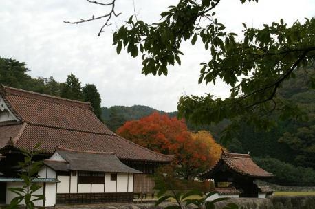 講堂と櫂の木