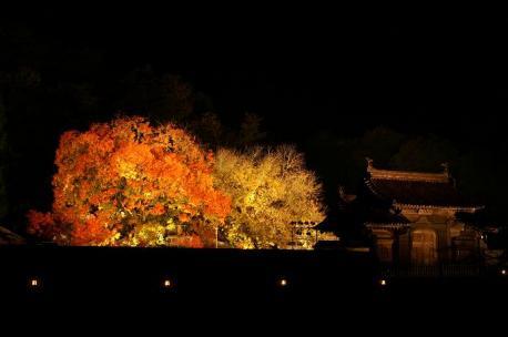 楷の木と門