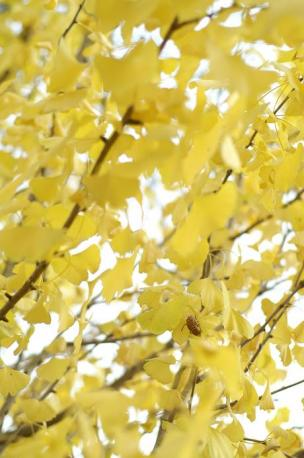夏のなごり・・・黄色バージョン