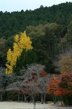 周りの木・・・紅葉してきました♪
