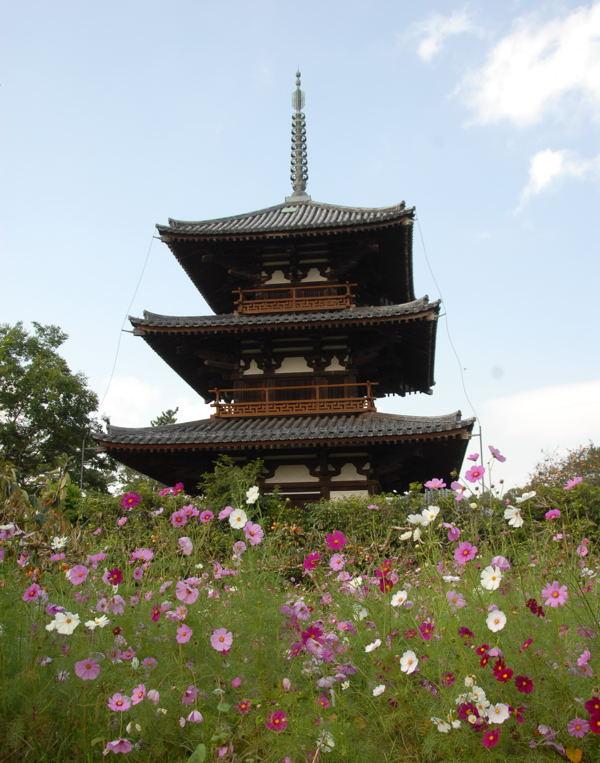 法起寺y01