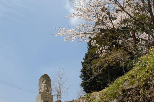 sennensakura02.jpg