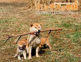 マリと3匹の子犬