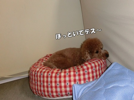 CIMG8337-cropあ
