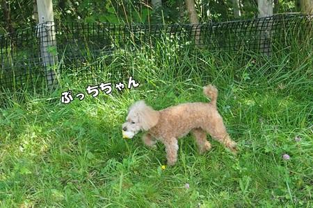 P9085139-cropあ