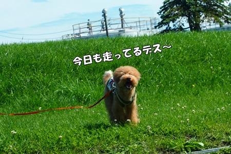 P9085221-cropあ