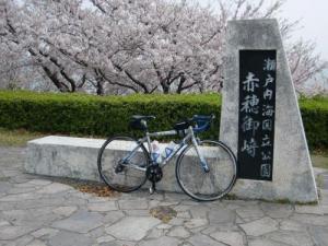 赤穂御崎桜1