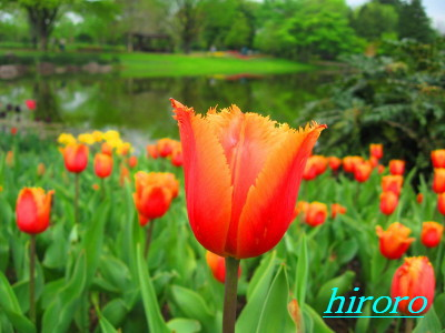 p070529昭和記念公園