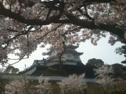 桜と掛川城