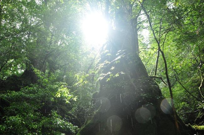 屋久島の木漏れ陽