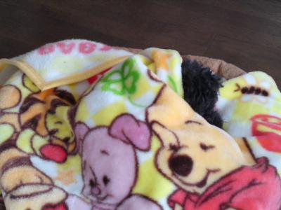 毛布をかけてあげました