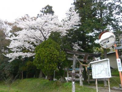 福島市の花見山2