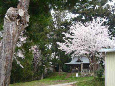 福島市の花見山3