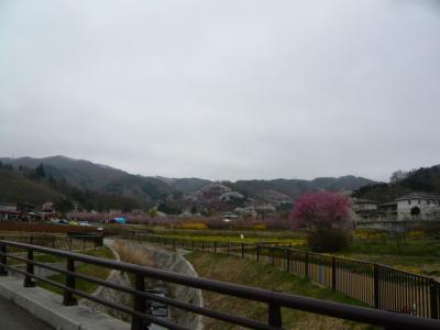 福島市の花見山4