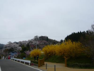 福島市の花見山5