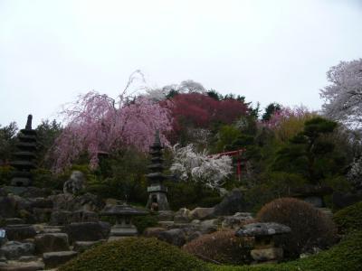 福島市の花見山12