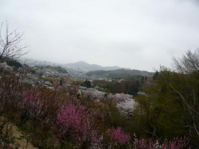 福島市の花見山18