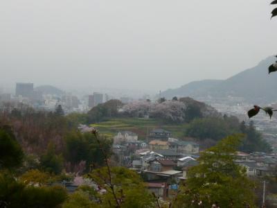 福島市の花見山19