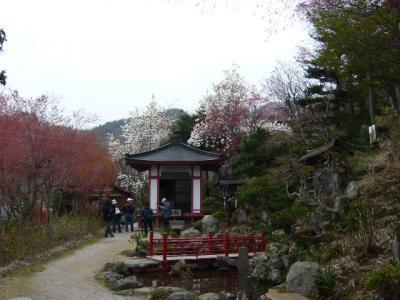 福島市の花見山20