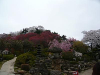 福島市の花見山22