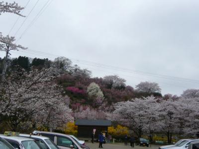 福島市の花見山23