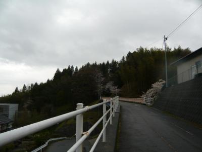 二本松の霞ヶ城公園4