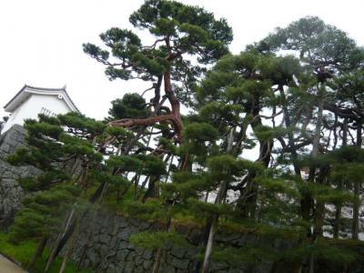 二本松の霞ヶ城公園13