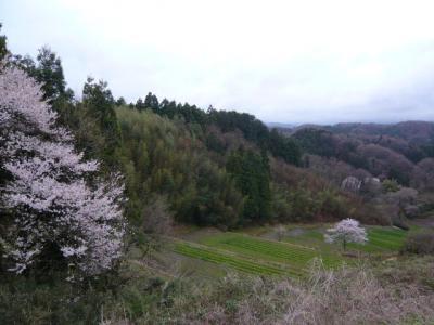 二本松の霞ヶ城公園21