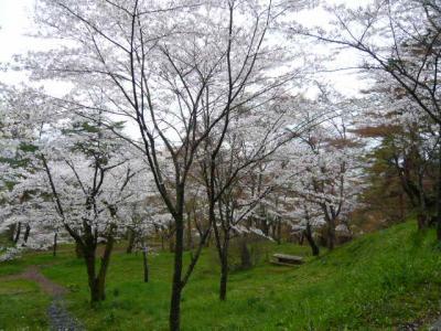 二本松の霞ヶ城公園27